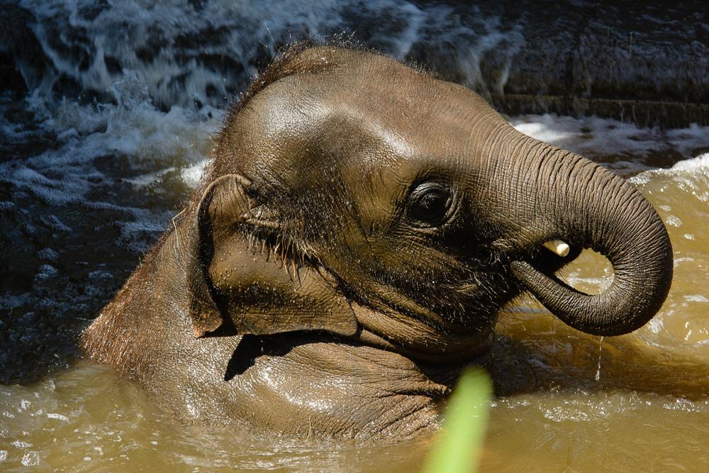 Badespaß im Elefantengehege ...