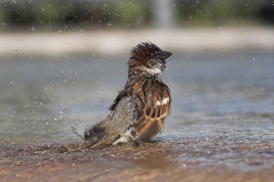 Badespaß im Februar