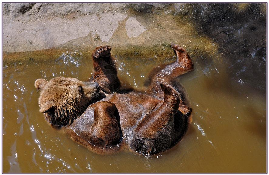 Badetag bei Bärs