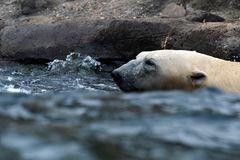 Badetag mit Bär