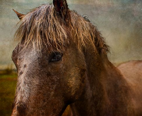 Badlands Horse 2011 #10 color