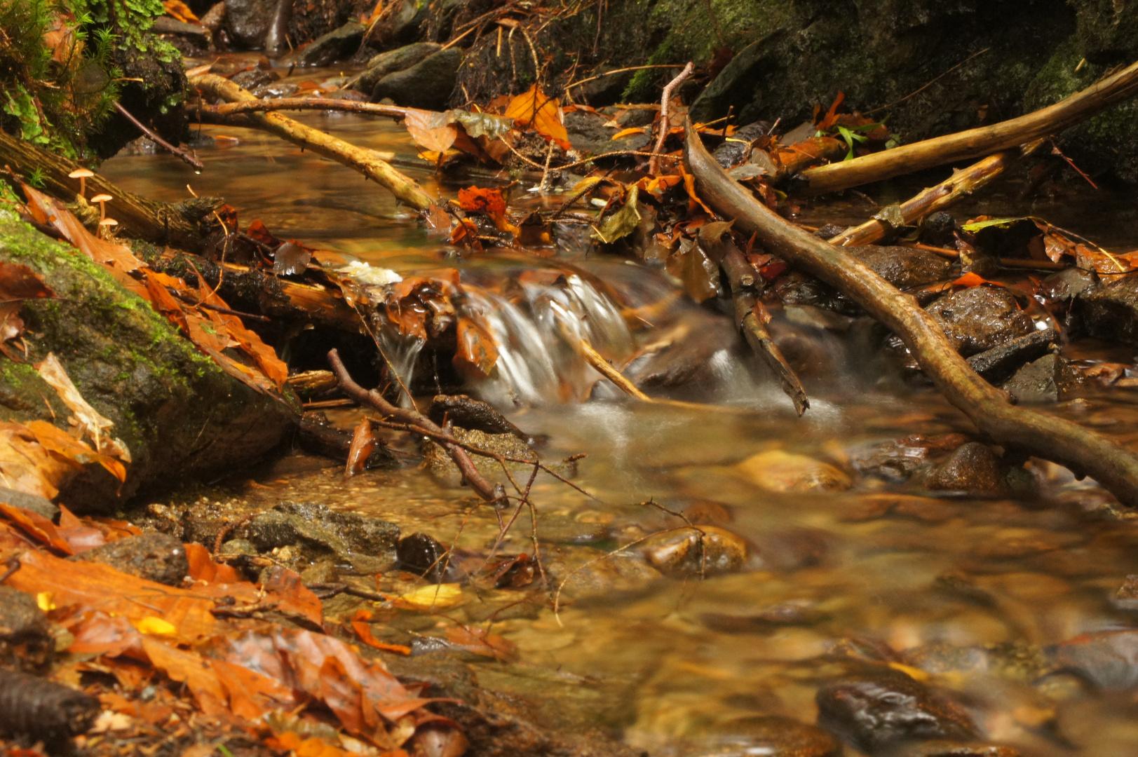 Bächlein im Nationalpark Lusen
