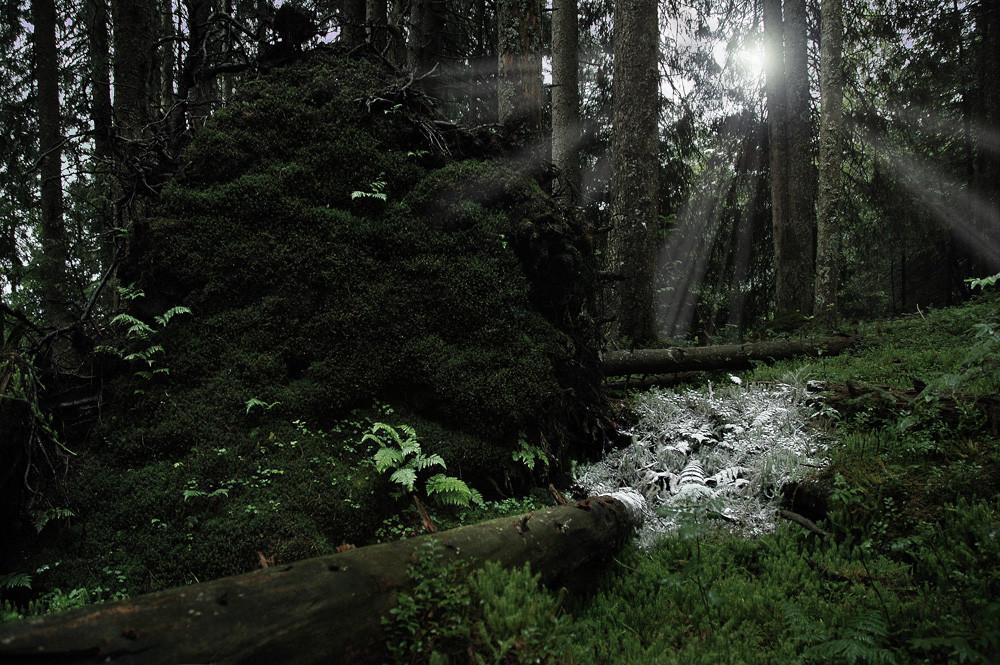 Bäcker-Wald