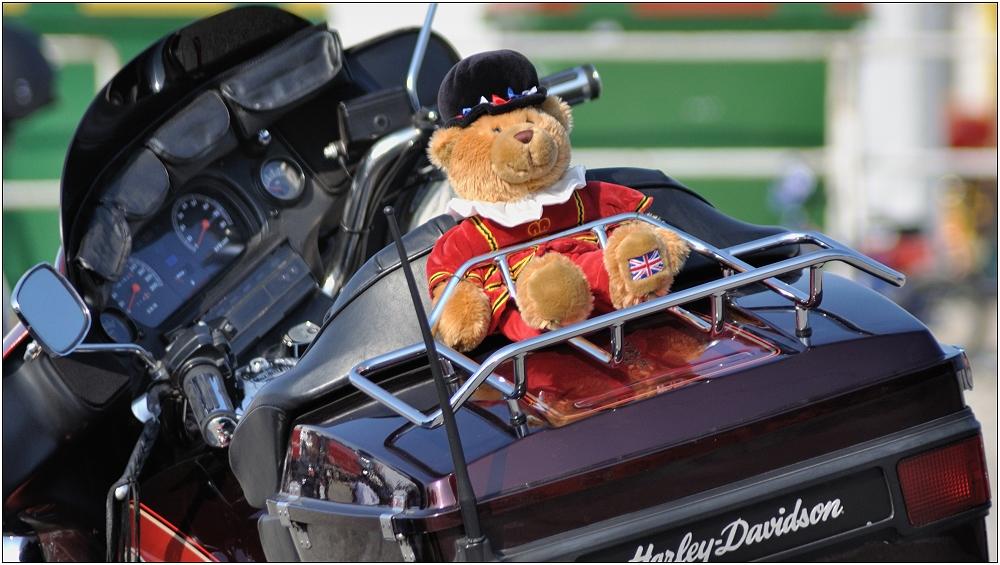 ... Bär fährt mit ...