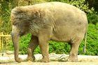 Bär-lefant