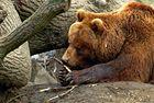 Bär nimmt,