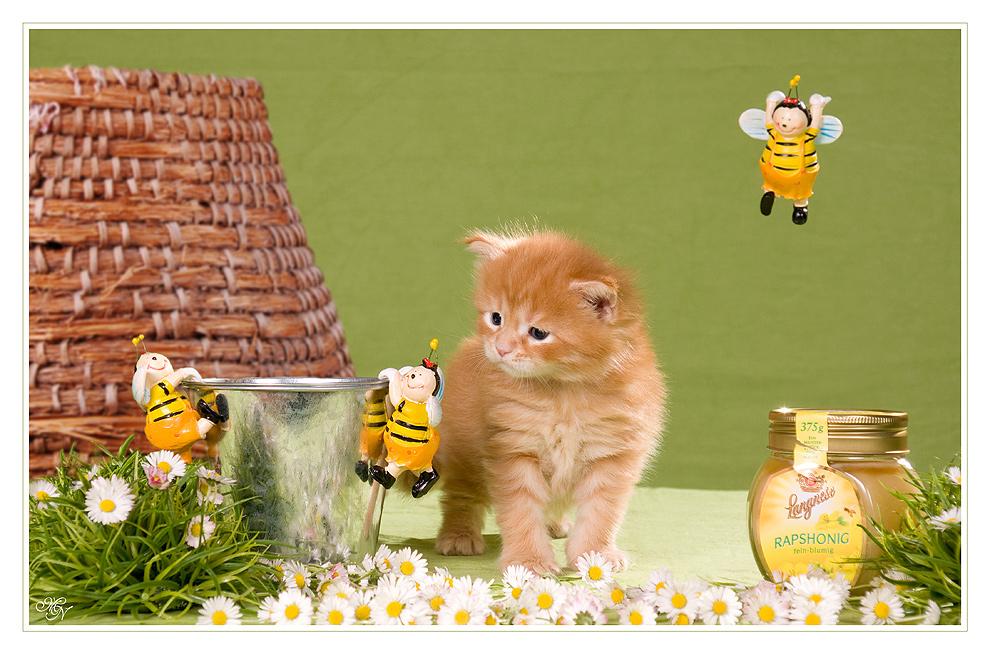 Bärchen auf Honigsuche