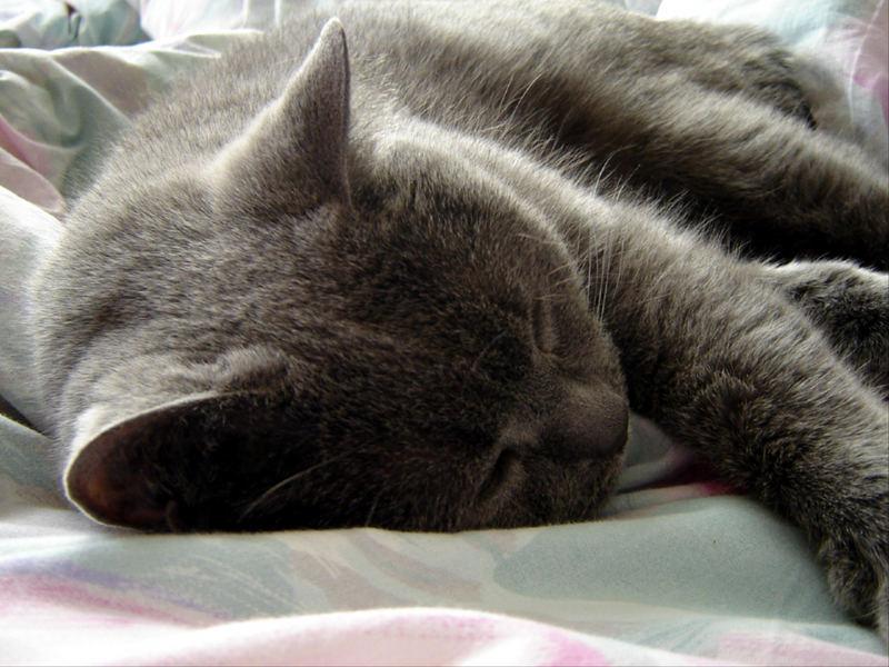 Bärchenschlaf