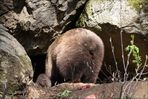 Bären - 4b
