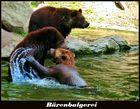 Bären bei Hagenbeck  -  Lustig anzusehen, wie diese drei jungen Bären spielten