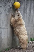Bären frühsport
