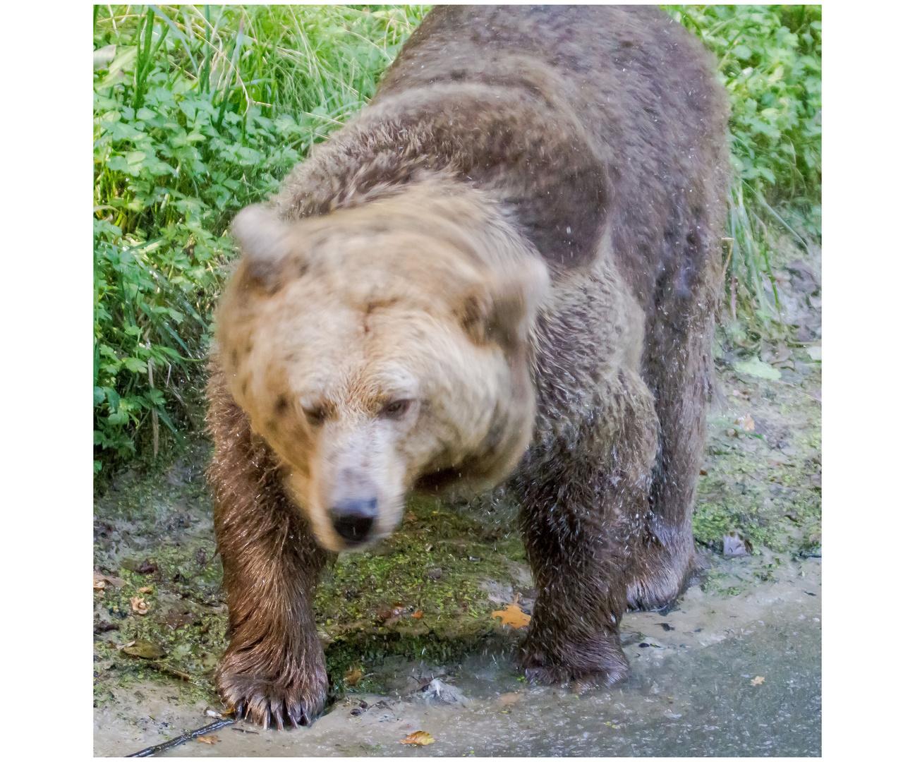 Bären IBF 06 - alles in Bewegung -