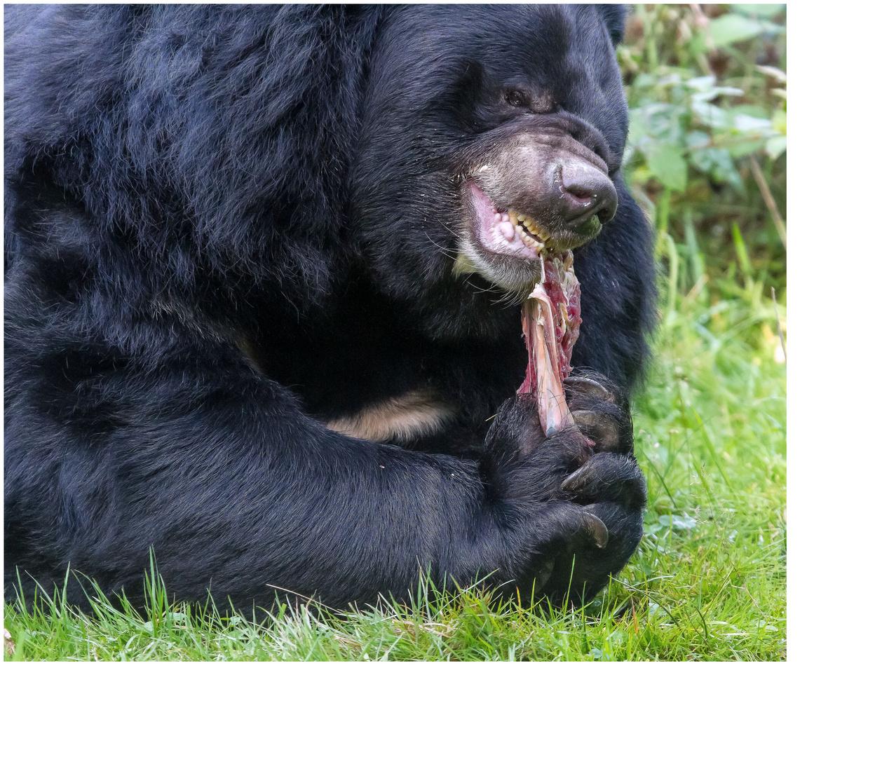 Bären IBF 13 - schmatz -