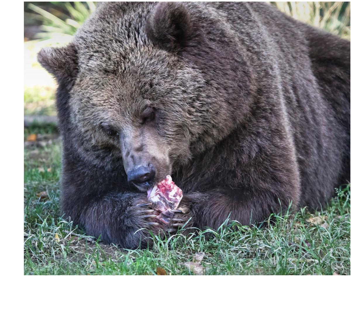 Bären IBF 14 - es schmeckt -