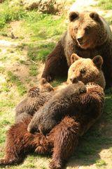 Bären Idylle