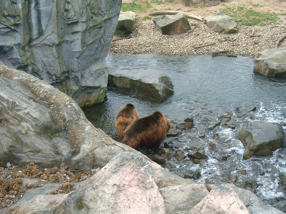 Bären im Zoom Gelsenkirchen