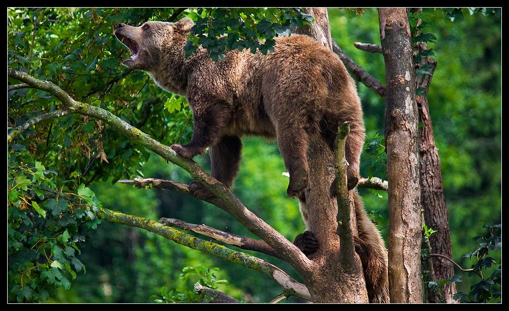 Bären - Wildpark Poing