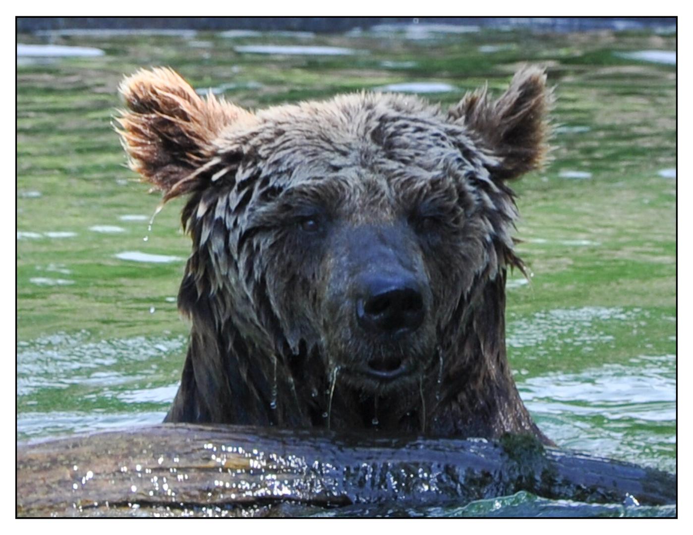 Bärenbad