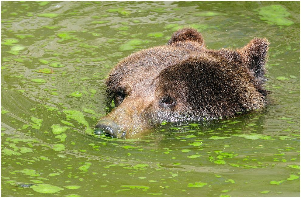 Bärenbad am Sonntag !