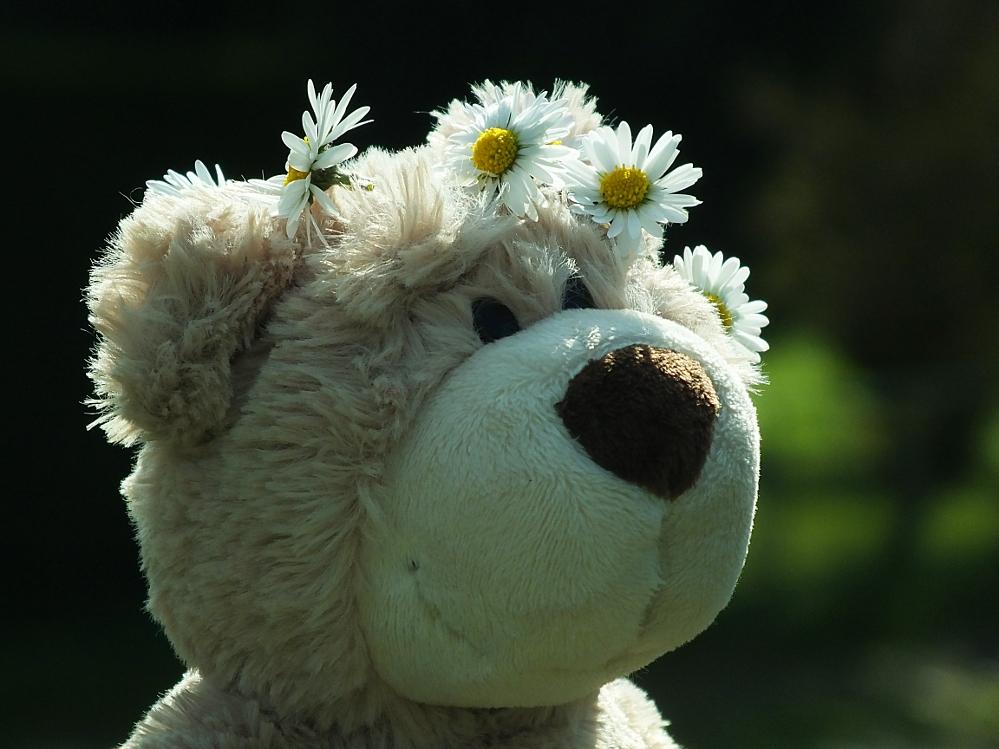 Bärenbraut