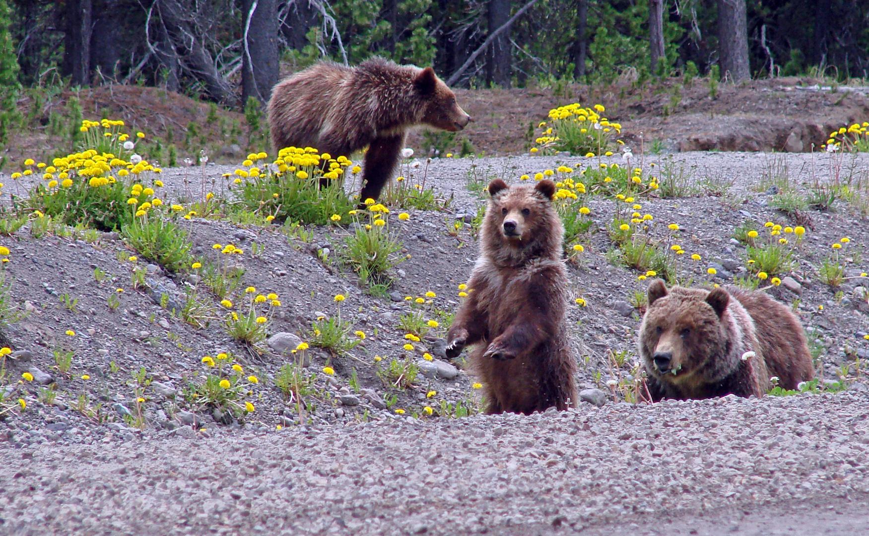 Bärenbrüder in Real - Part Familie