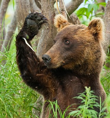 bären.brüder IV - *und.tschüss*