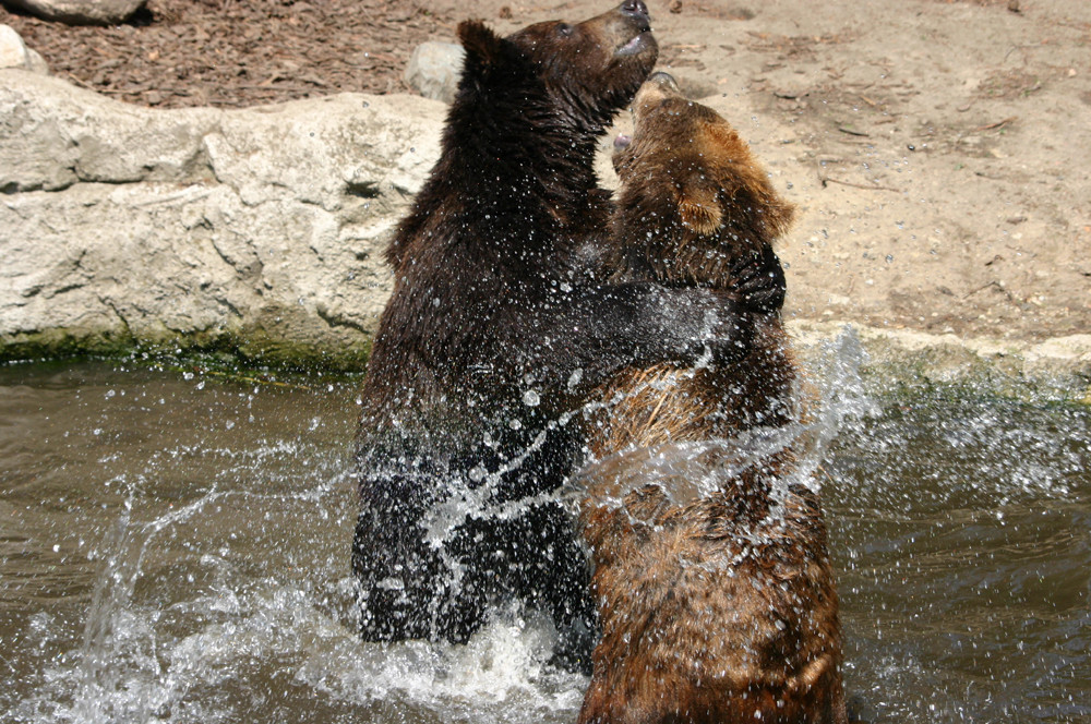 Bärenbrüder - Jetzt gibts ärger !!!