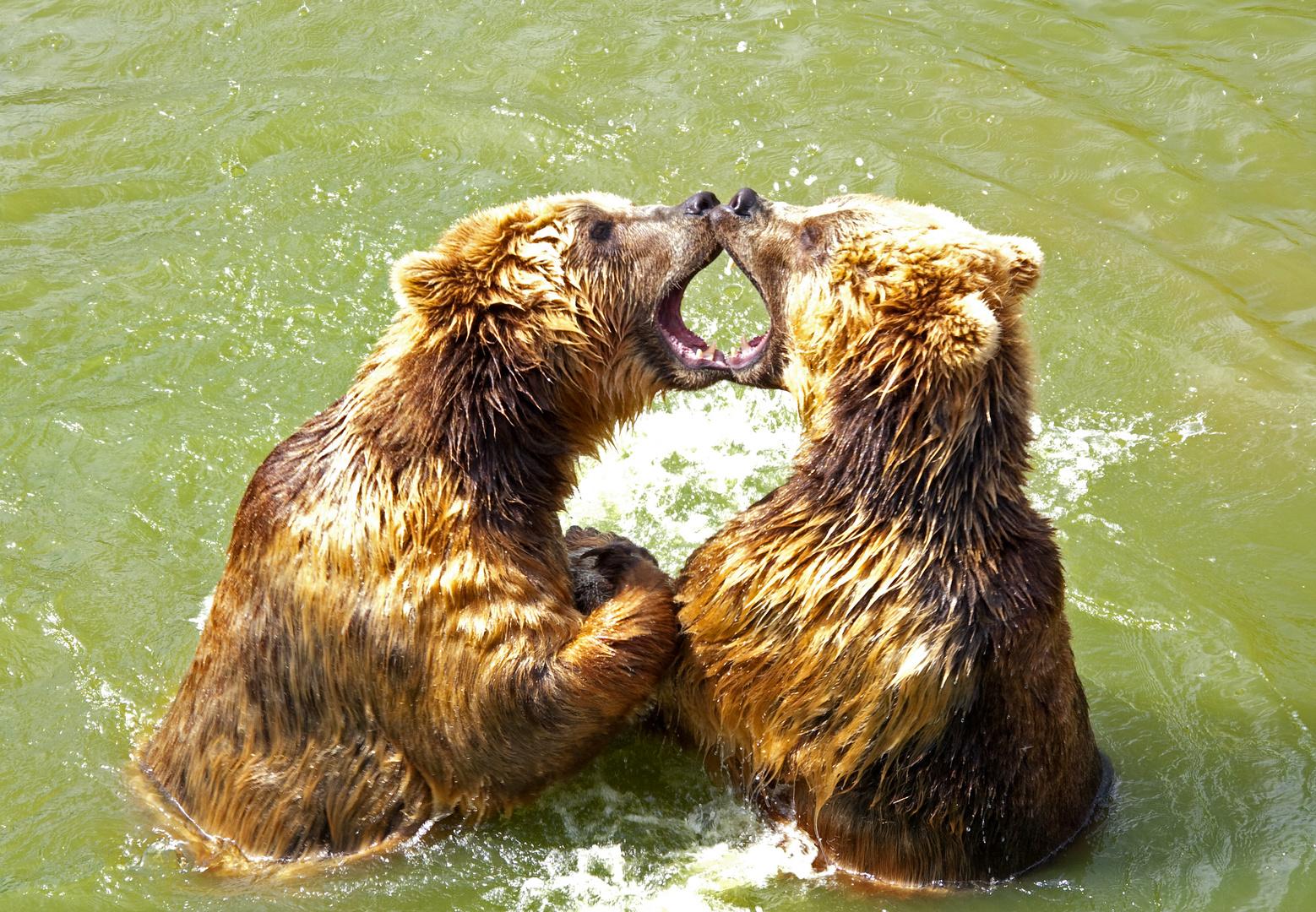 Bärenbrüder - Teil 1 jetzt im Zoo!