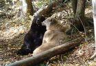 Bärenfreundschaft im Alternativen Bärenpark Worbis