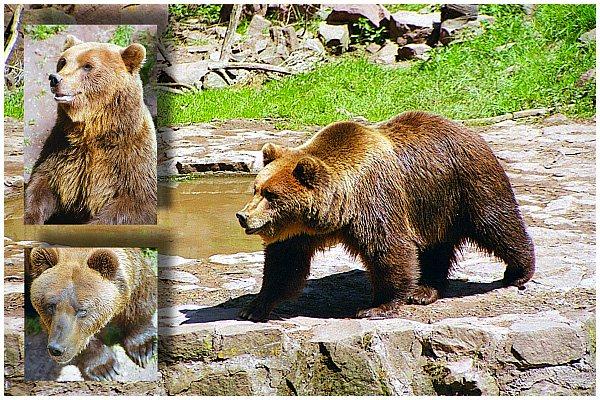 Bärenhitze ...