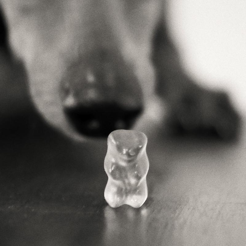 Bärenhund
