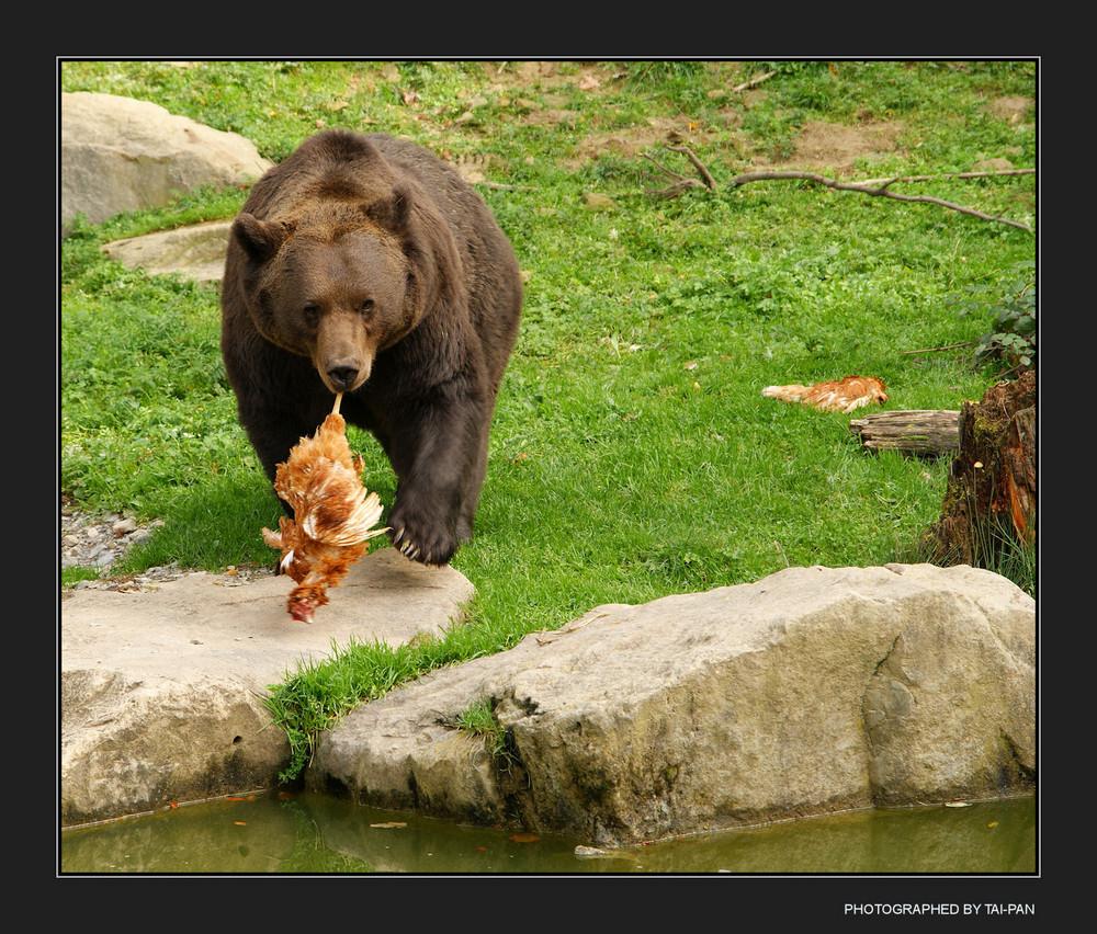Bärenhunger