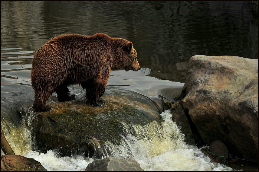 Bärenkind 1