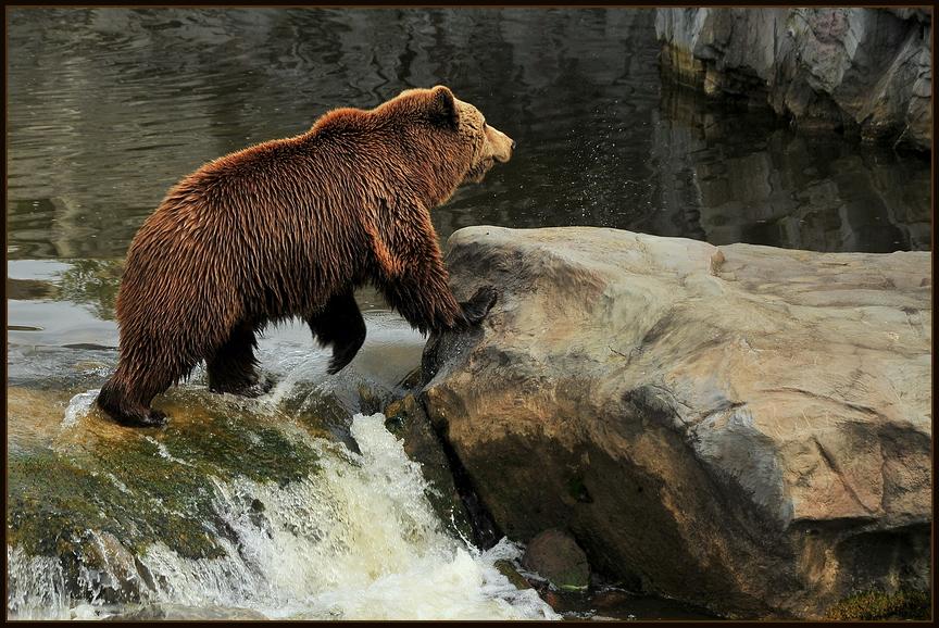 Bärenkind 2