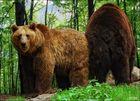 Bärenkompott
