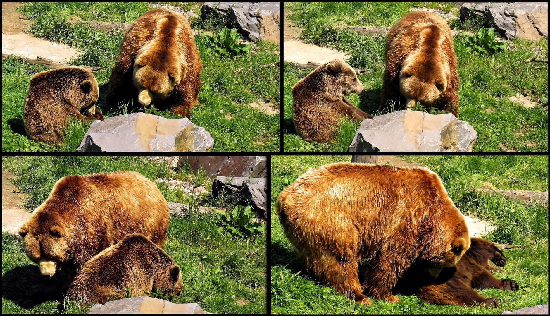 Bärenliebe!