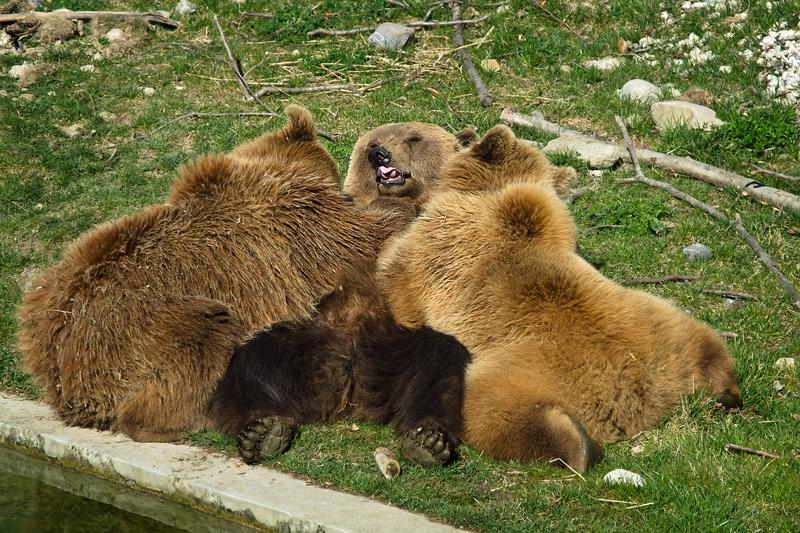 Bärenmutter Björk