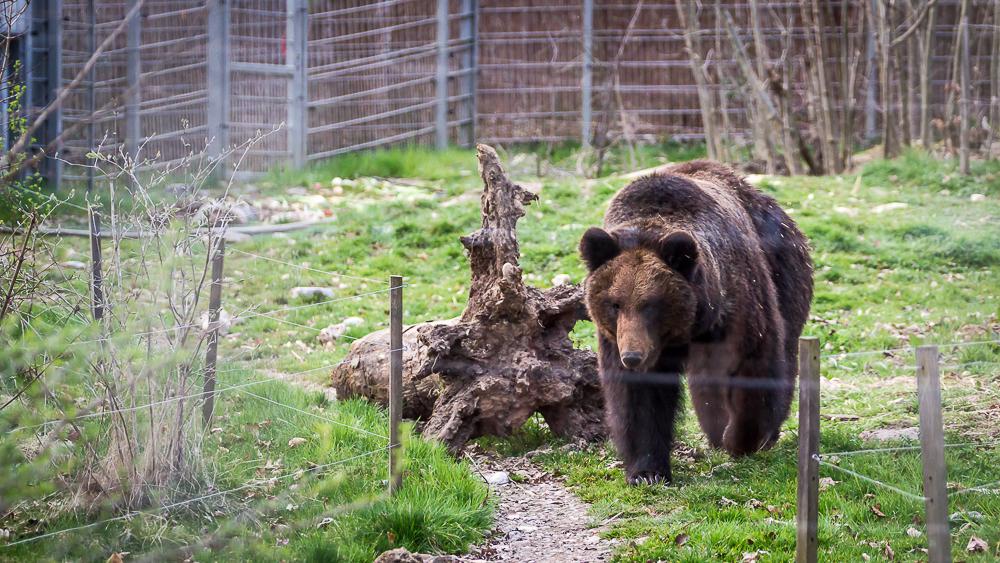Bärenmutter Mascha
