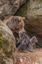 Bärennachwuchs 2