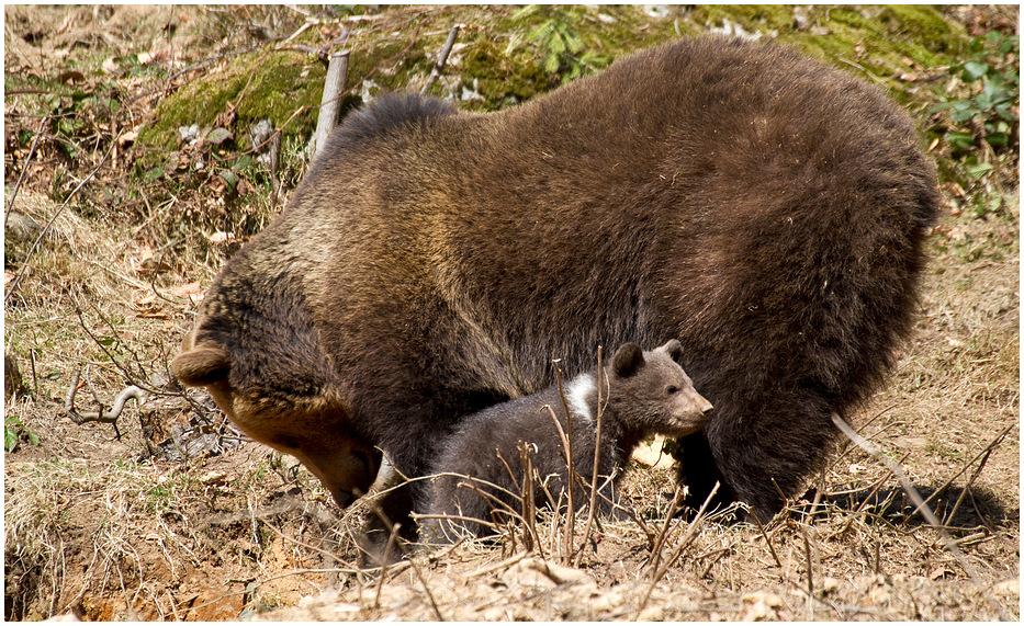 Bärennachwuchs!