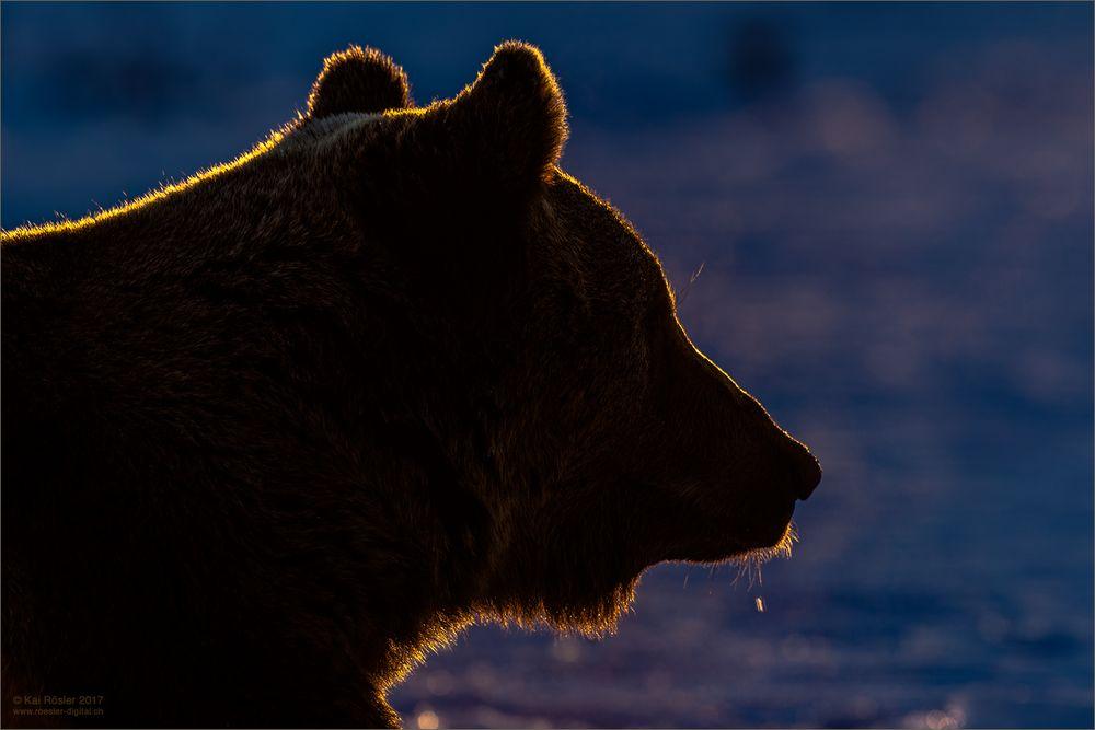 Bärenpause