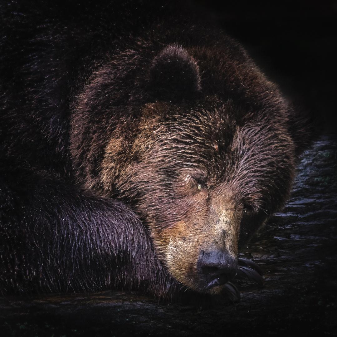 Bärenschlaf