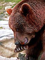 Bärenschmaus :-)