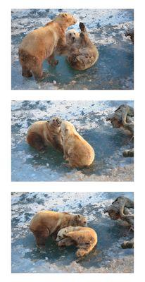 Bärenspaß