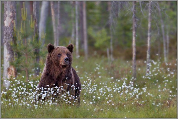 Bärenstark ...