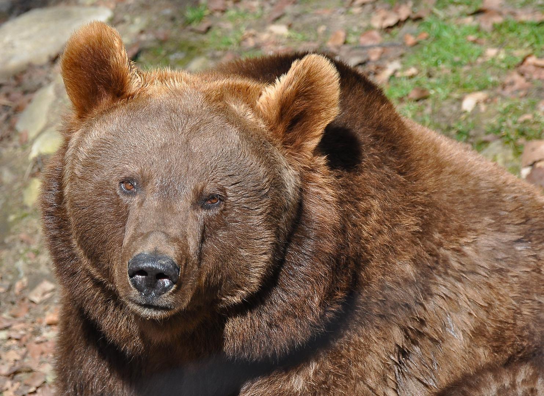 Bärenstark