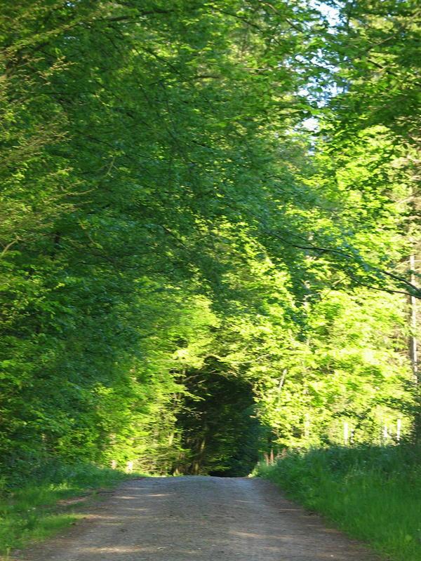 Bärentalweg im Frühsommer