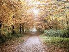 Baerl Wald