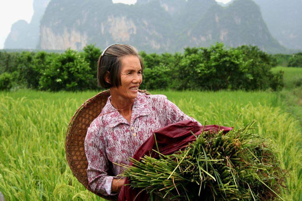 Bäuerin im Reisfeld in Südchina