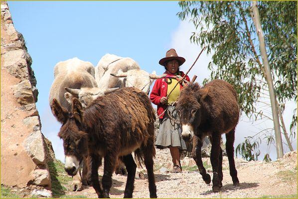 Baeuerin mit Esel und Ochs ... in Peru